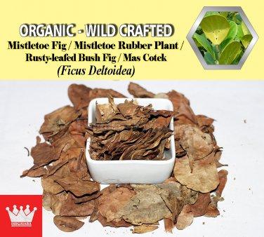 8 Oz / 227g Mistletoe Fig Leaves Mistletoe Rubber Plant Rusty-leafed BushFig Ficus Deltoidea