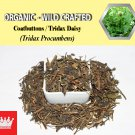 2 Lb / 908g Coatbuttons Tridax Daisy Tridax Procumbens Organic Wild Crafted 100% Fresh