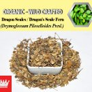 8 Oz / 227g Dragon Scales Dragon's Scale Fern Drymoglossum Piloselloides Organic Wild FRESH
