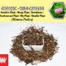 8 Oz / 227g Sensitive Plant Sleepy Plant Dormilones Touch-me-not Plant Mimosa Pudica Organic