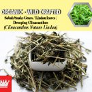 1 Lb / 454g Sabah Snake Grass Lindau leaves Drooping Clinacanthus Clinacanthus Nutans Lindau