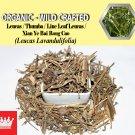 1 Lb / 454g Leucas Leaves Thumba Line Leaf Leucas Xian Ye Bai Rong Cao Leucas Lavandulifolia