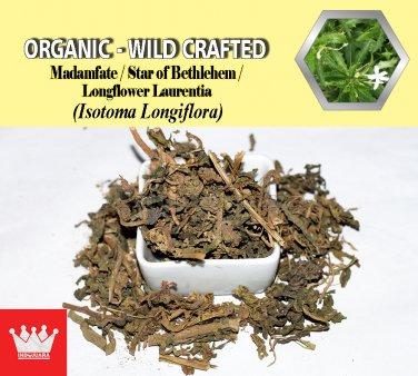 8 Oz / 227g Madamfate Star of Bethlehem Longflower Laurentia Isotoma Longiflora Organic Wild