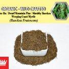 2 Lb / 908g False Ru Pine Shrubby Baeckea Dwarf Mountain Baeckea Frutescens Organic Wild