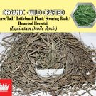 8 Oz / 227g Horse Tail Bottlebrush Plant Branched Horsetail Equisetum Debile Organic Wild