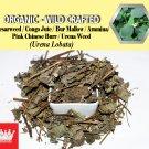 1 Lb / 454g Caesarweed Congo Jute Bur Mallow Aramina Urena Weed Urena Lobata Organic Wild