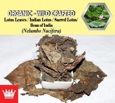 3 Oz / 84g Lotus Leaves Indian Lotus Sacred Lotus Nelumbo Nucifera Organic Wild Crafted