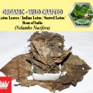 1 Lb / 454g Lotus Leaves Indian Lotus Sacred Lotus Nelumbo Nucifera Organic Wild Crafted
