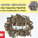 8 Oz / 227g Coleus Common Coleus Painted Nettle Coleus Scutellarioides Organic Wild Crafted