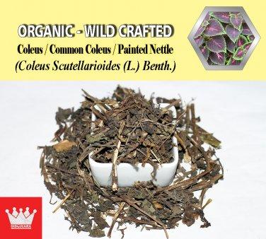 8 Oz / 227g Coleus Common Coleus Painted Nettle Coleus Scutellarioides Organic Wild Crafted