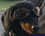 Dog Sunglasses DOGGLES ILS with Flames Size Small