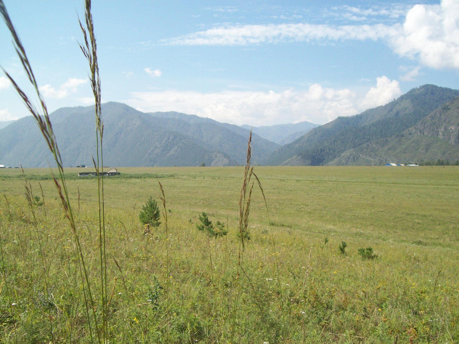 0,8 Hectar of land in the Altai mountains
