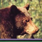 A Shadow in the Forest : Idaho's Black Bear by John J. Beecham and Jeff...