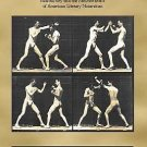 Amer Lit Realism and Naturalism: A Man's Game : Masculinity and the...