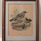 "Bird Print Alpine Accentor Antique Framed 15"" x 12""  BEAUTIFUL!"