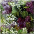 Beautiful Collectible Flower Kitchen Fridge Refrigerator Magnet - Still Life #4