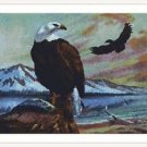 Cross-Stitch Embroidery Color PATTERN with DMC thread codes - Beautiful Eagles