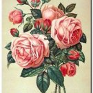 Beautiful Vintage Decor Collectible Kitchen Fridge Magnet - Red - Pink Roses