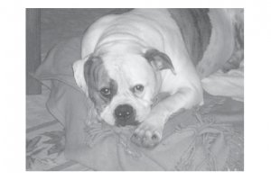 Greeting Cards Dog Cards Blank Notecards 219