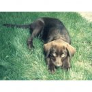 Greeting Cards Dog Cards Blank Notecards 228