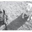 Greeting Cards Dog Cards Blank Notecards 202 bw