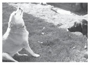Greeting Cards Dog Cards Blank Notecards 205 bw