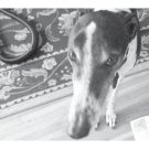 Greeting Cards Dog Cards Blank Notecards 206