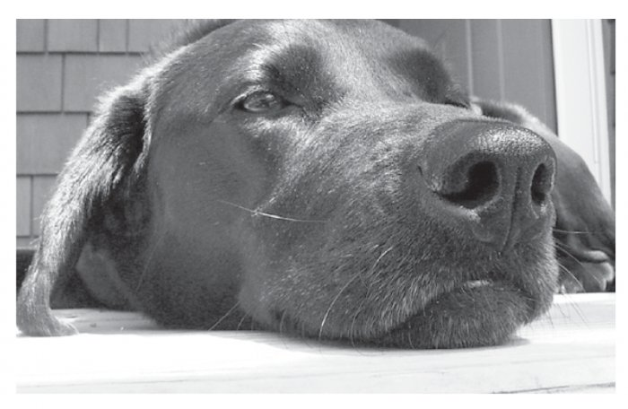 Greeting Cards Dog Cards Blank Notecards 207