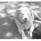 Greeting Cards Dog Cards Blank Notecards 213