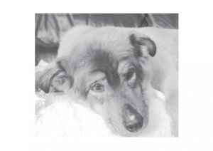 Greeting Cards Dog Cards Blank Notecards 230