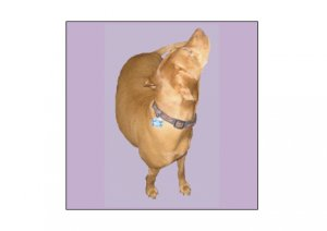 Greeting Cards Dog Cards Blank Notecards 242