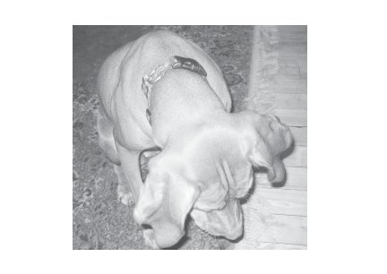 Greeting Cards Dog Cards Blank Notecards 243