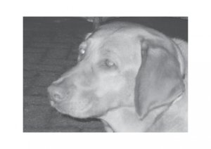 Greeting Cards Dog Cards Blank Notecards 246