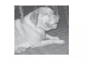 Greeting Cards Dog Cards Blank Notecards 249