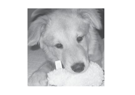 Greeting Cards Dog Cards Blank Notecards 251