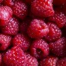 Raspberry Preserves Clamshell Parasoy Wax Cubes