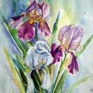 Original watercolor painting, Iris flowers, floral wall art, wall decor, botanical, nature artwork