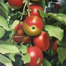 "Hand painted oil painting on canvas""bumper harvest fruits""60x90CM(23.6""x35.4"")Unframed-63"