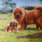 "Simple modern Hand-painted oil painting on canvas""Tibetan mastiff""60x90CM(23.6""x35.4"")Unframe-05"