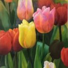 "Hand painted oil painting on canvas""Ptulip""50x100CM(20""x40"")Unframed-24"