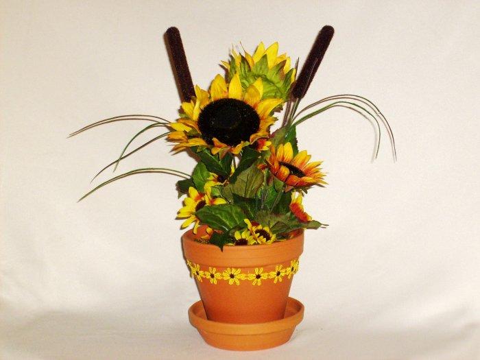 Sunflowers in Terra Cotta Pot