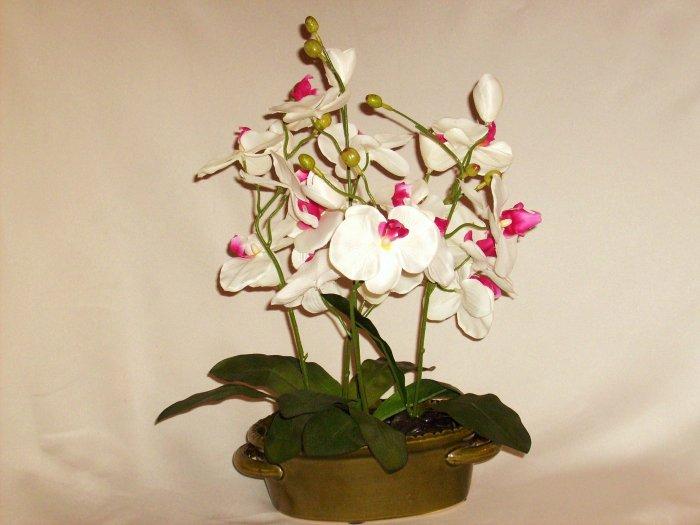 Dancing Phalaenopsis Orchids