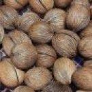3 Big Seed Cerbel OdollamPongPong Pot for Plant Bedding and Decoration