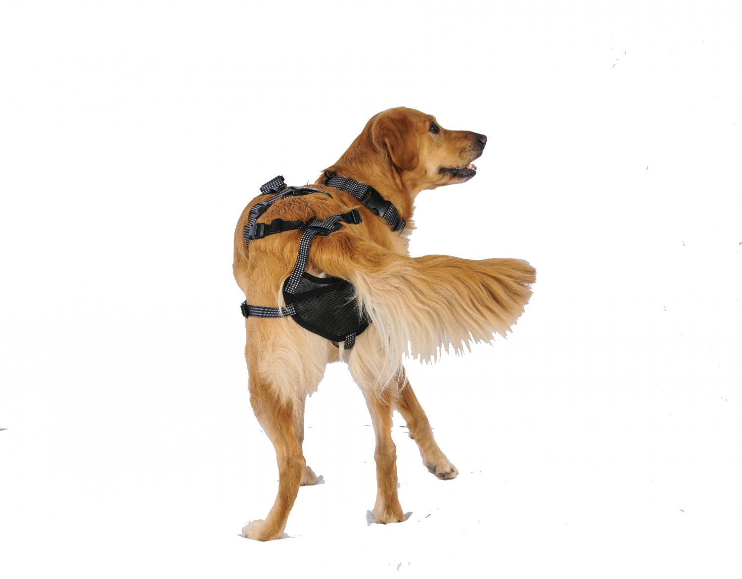 PABS Deley Her Spay Harness (X-Large)