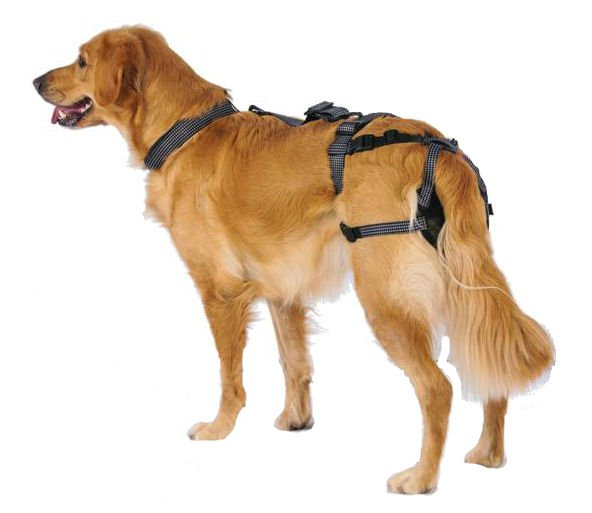 PABS Deley Her Spay Harness (XX-Large)
