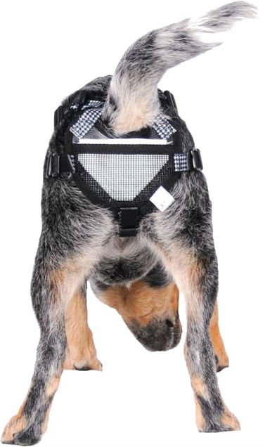 PABS Deley Her Spay Harness (Medium)
