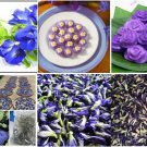 100% THAI PURE NATURAL DRIED BUTTERFLY PEA CLITORIA TERNATEA BLUE TEA DRINK