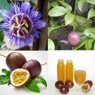 THAI PASSION FLOWER 10 SEEDS Purple Granadilla PASSIFLORA EDULIS Fruit Vine