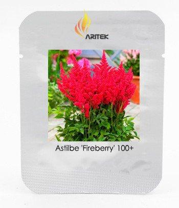Fireberry False Spiraea Red Astilbe Perennial Flower Seeds, Professional Pack
