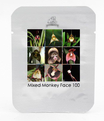 9 Types Perennial Dracula Simia Monkey Face Flower 100 Seeds / Pack Rare Orchid